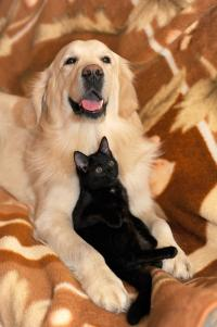 dog-and-cat-2908810_960_720.jpg